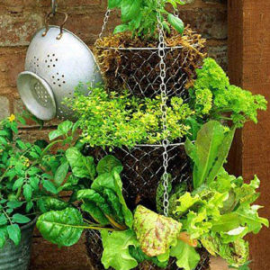 Hanging Herb Basket