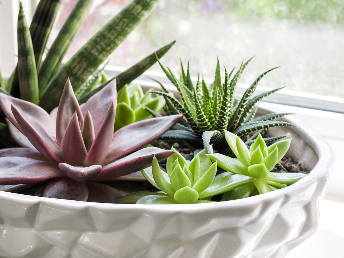 how-to-keep-succulents-alive-succulent-planter