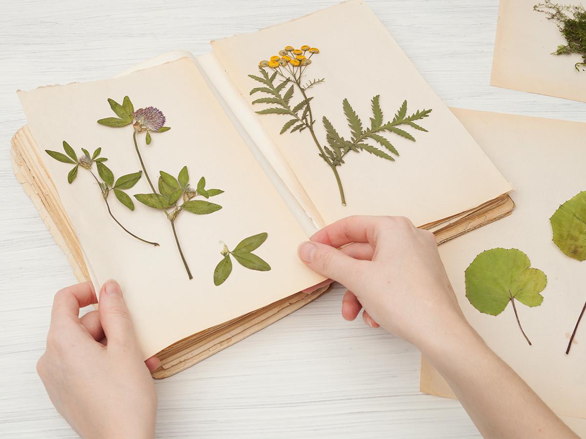 fun ways to reuse dried flowers floral scrapbook