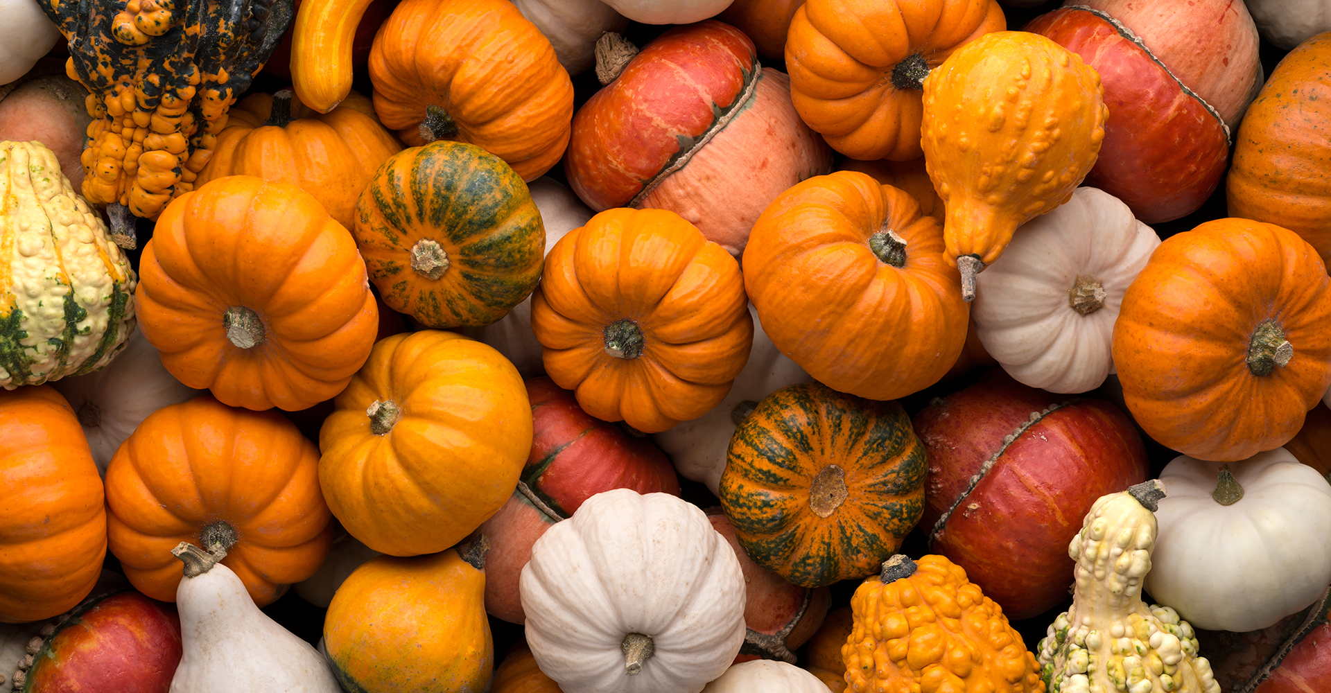 crafts pumpkin header